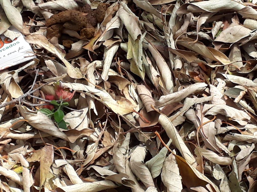 Fedor nas folhas