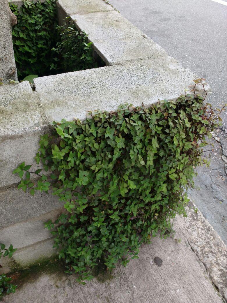 Plantas verdinhas